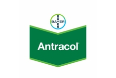 ANTRACOL 700 WP  (4x5kg)